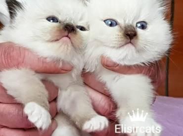 Last kittens available