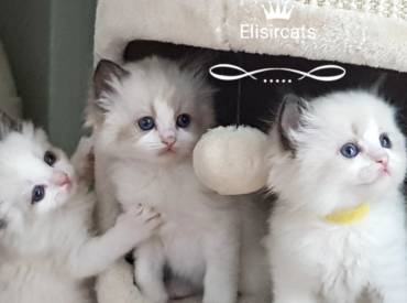 Kittens available!